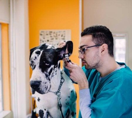 veterinary medicine